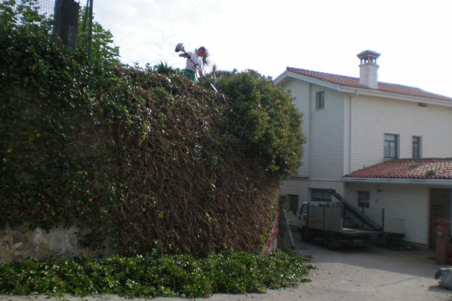 Poda en Cantabria